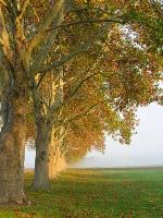trees-cene1